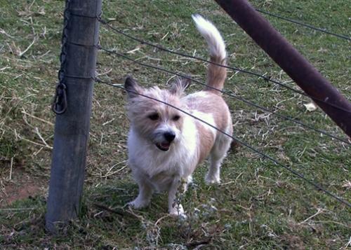 Paddy Dog