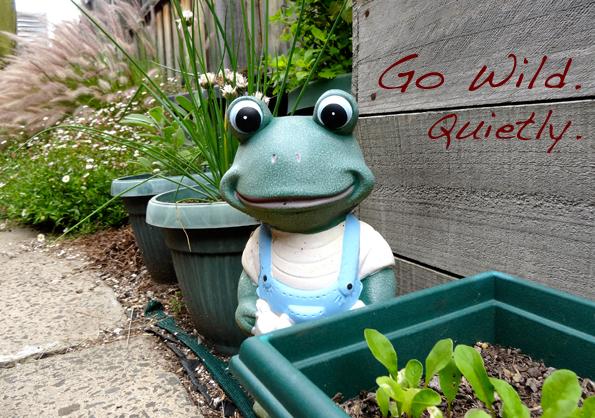 Frog GWQ